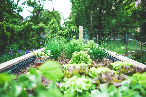 How to Start the Perfect Home Garden